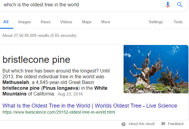 oldest-tree.png