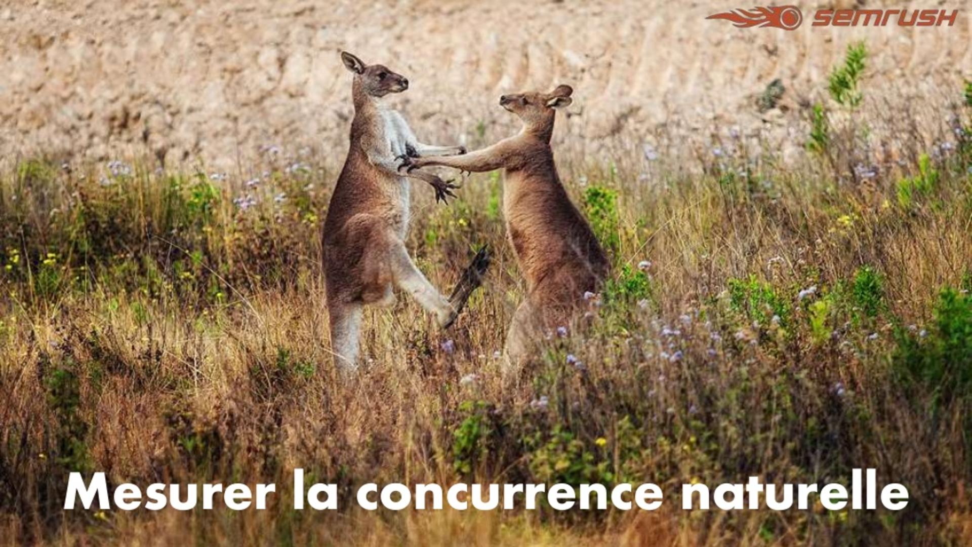 Mesurer la concurrence naturelle