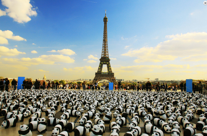 Street marketing como estrategia internacional - Ejemplo WWF