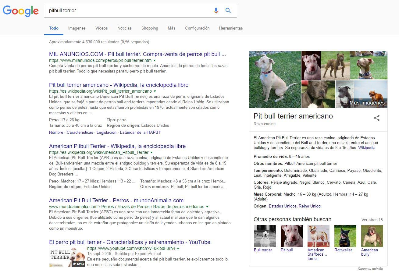 "Knowledge graph - SERP de la keyword ""pitbull terrier"""
