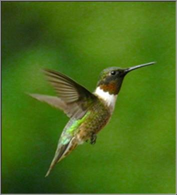 Hummingbird: Google's Kinda-New Algorithm
